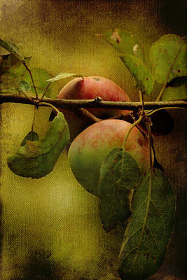 Poster featuring the photograph An Apple A Day by Kathleen Holley