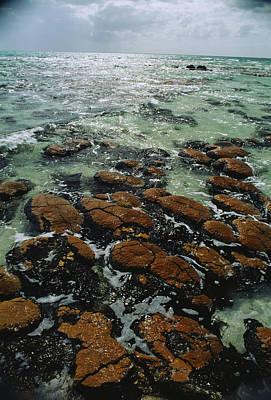Ancient Stromatolite Reefs Still Poster