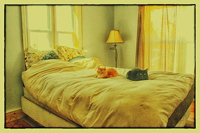 Poster featuring the photograph Andi's Cats by Kimberleigh Ladd