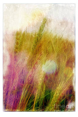 Another Field Of Dreams Poster by Judi Bagwell