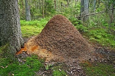 Ant Hill Poster by Bjorn Svensson