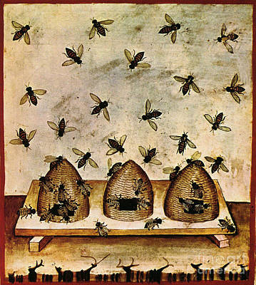 Apiculture-beekeeping-14th Century Poster by Science Source