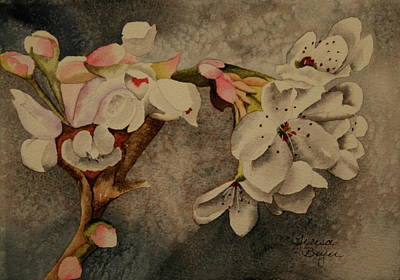 Poster featuring the painting Apple Blossom by Teresa Beyer