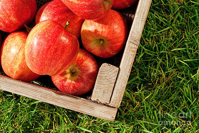 Apples In A Crate On Grass Poster