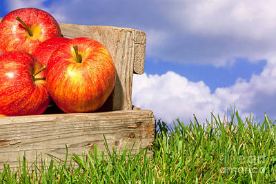 Apples In A Crate On Grass With Blue Cloudy Sky Poster