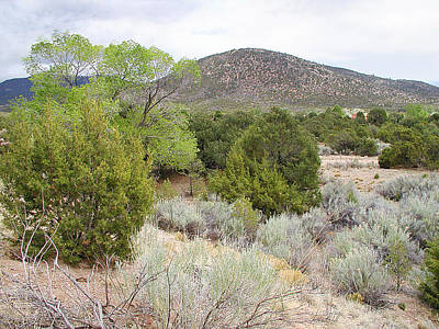 April New Mexico Desert Poster by Kathleen Grace