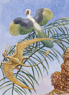 Archaeopteryx And Pterosaurs Were Some Poster by Charles R. Knight