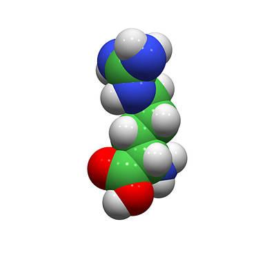 Arginine Molecule Poster by Dr Tim Evans