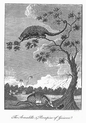 Armadillo & Porcupine, 1796 Poster by Granger