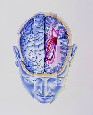 Art Of Abstract Head Showing Brain Limbic System Poster