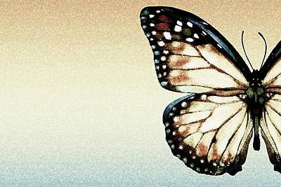 Artistic Butterfly Poster by Chris Knorr