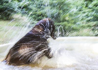 Artistic Splash Poster