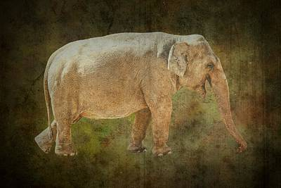 Asian Elephant Poster by Rudy Umans
