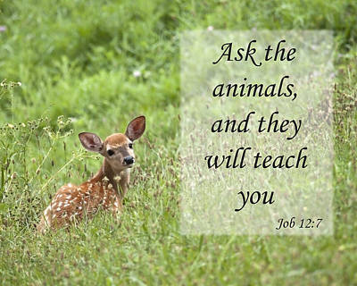 Ask The Animals Poster by Jeannette Hunt