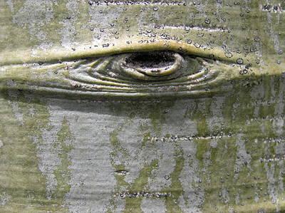 Aspen Eye Poster