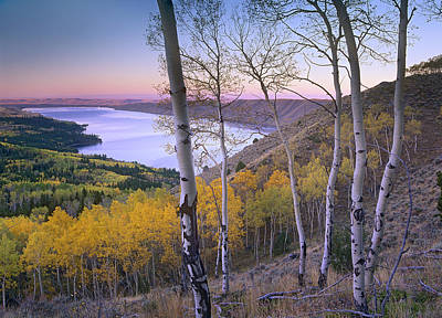 Aspen Forest Overlooking Fremont Lake Poster by Tim Fitzharris