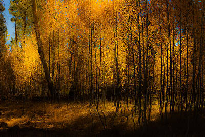 Poster featuring the photograph Aspen Glow by Randy Wood