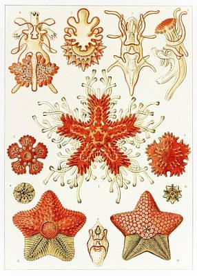 Asteroidea Organisms, Artwork Poster by Mehau Kulyk