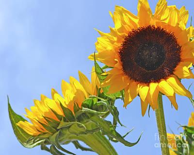 August Sunshine Poster
