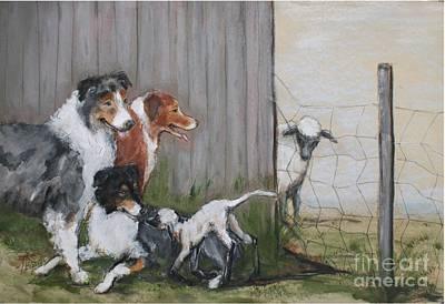 Australian Shepherd Hide And Seek Poster by Ron Hevener
