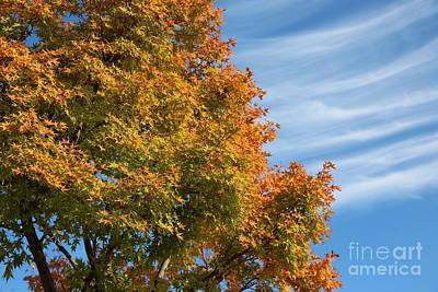 Autumn Anticipation Poster by Carol Groenen