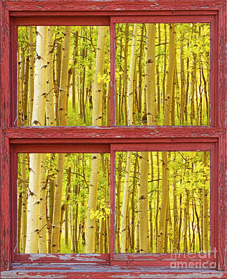 Autumn Aspen Trees Red Rustic Picture Window Frame Photos Fine A Poster by James BO  Insogna