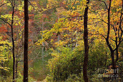 Autumn Colors In The Forest Poster by Iris Greenwell
