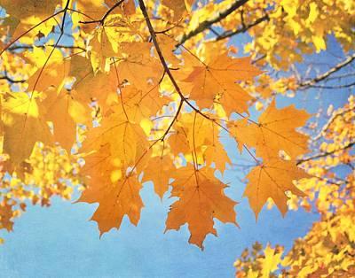 Autumn Colors Poster by Kim Hojnacki
