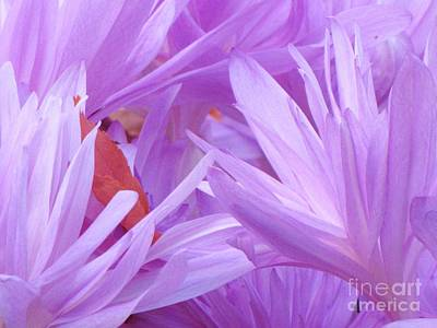 Poster featuring the photograph Autumn Crocus by Michele Penner