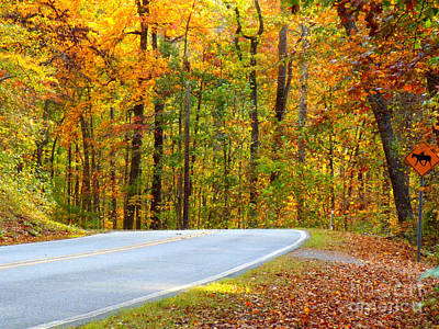 Poster featuring the photograph Autumn Drive by Lydia Holly