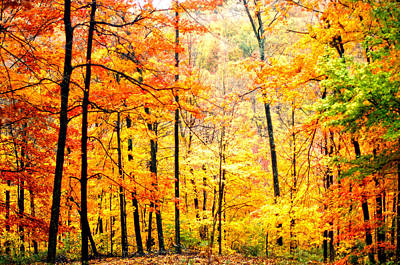 Poster featuring the photograph Autumn Forest by Randall Branham