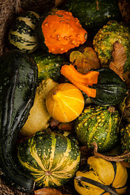 Autumn Gourds Collage Poster