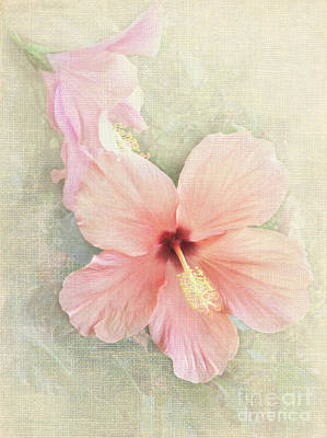 Autumn Hibiscus Poster