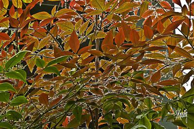 Autumn In Muttart Poster