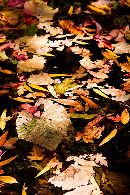 Poster featuring the photograph Autumn In Texas by Jason Smith