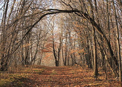 Poster featuring the photograph Autumn In The Woods by Penny Meyers