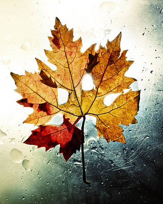 Autumn Leaf Poster by Ivan Vukelic