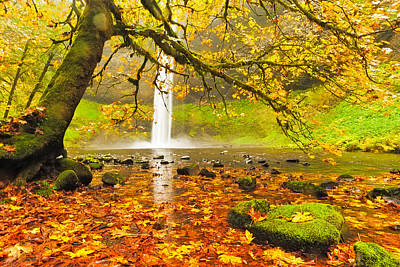 Autumn Leaves At South Silver Falls Poster