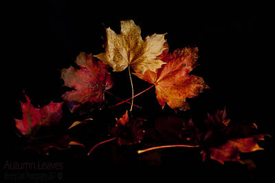 Poster featuring the photograph Autumn Leaves by Beverly Cash