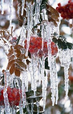 Autumn Leaves Covered In Ice Poster