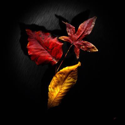 Autumn Leaves Poster by Gerlinde Keating - Galleria GK Keating Associates Inc