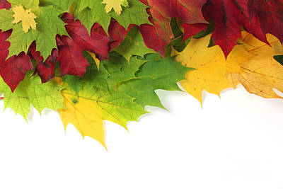 Autumn Leaves In Colour Poster