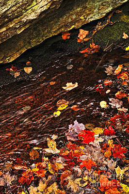 Autumn Leaves In River Poster