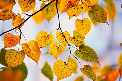 Autumn Leaves Poster by Jenny Rainbow