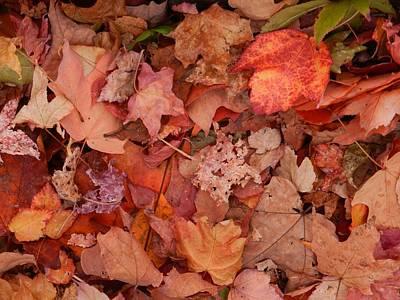 Poster featuring the photograph Autumn Leaves by Karen Molenaar Terrell