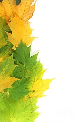 Autumn Leaves On Edge Poster by Simon Bratt Photography LRPS