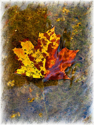 Poster featuring the digital art Autumn Maple Leaf In Water by Debbie Portwood