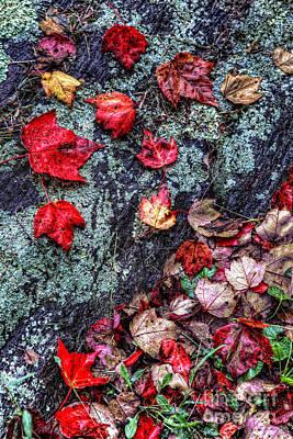 Autumn On The Rocks Poster