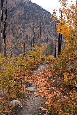 Autumn Path Poster by Mike Reid