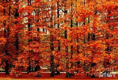 Autumn Red Maple Landscape Poster
